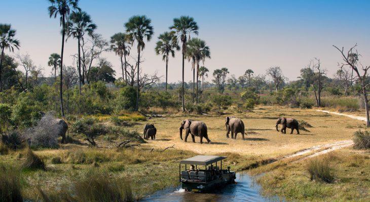 Namibya, Botswana ve Viktorya Şelaleleri, Okawongo Kwando ve Chobe Nehirlerinde eşsiz bir tekne turu...