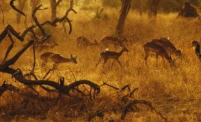 Tanzanyada Safari ve Zanzibar Turu