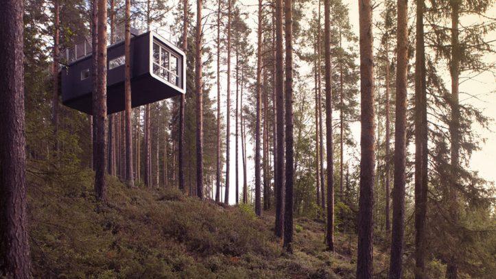 Ağaç Otel ve Kuzey Işıklarının Keşfi!